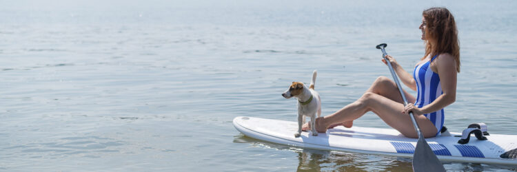 Pet on board: stand up paddle with the dog in the bay