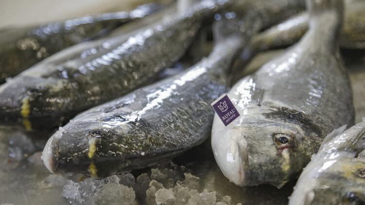 Farmed fish instead of wild-caught - Aquacultured fish: dorado, sea bass, angler fish - a variety of delicacies
