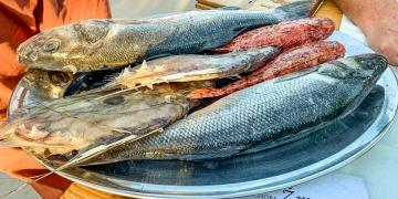 Auswahl an frischem Fisch in Konoba Zmara, Zut