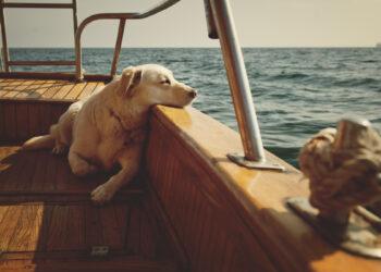 Haustiere an Bord: Hund und Katze auf Boot oder Yacht.