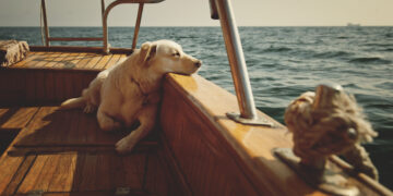 Pets on board: dog and cat on boat or yacht.