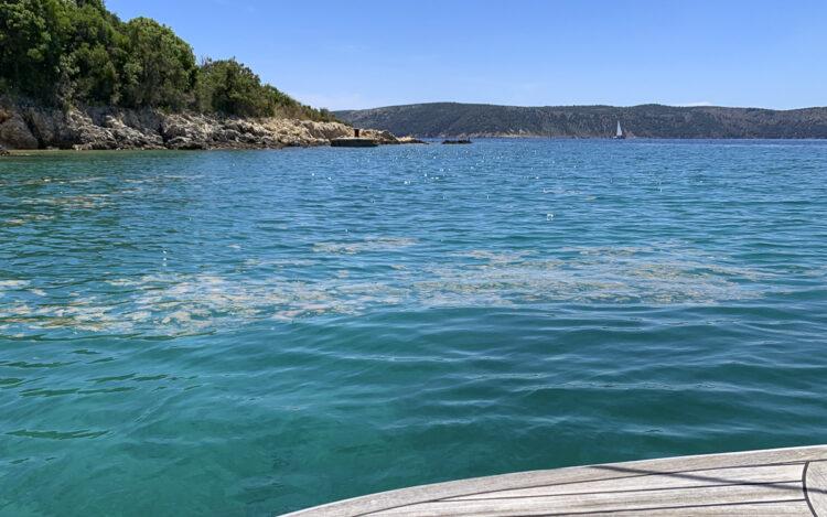 Algen / Algenteppich in der Kvarner Bucht / Kroatien / Adria